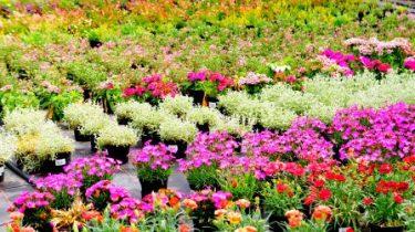 Livraison à domicile – Plants de fleurs et de légumes