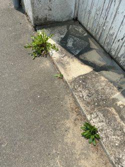 Entretien des pieds de murs